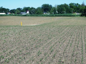 Completed Water and Sediment Control Basins in Crop Field
