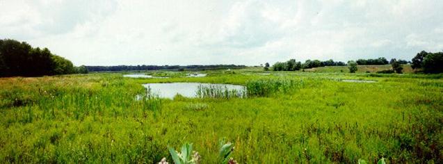 Wetland Delineations